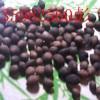 供应钙果种子 钙果种子价格 哪里有钙果种子
