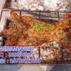 供应烤全羊技术 金饭碗秘制烤全羊技术 教烤乳鸽技术培训加盟