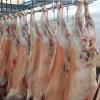 热销推荐 进口冻品代理冻整羊 全羊报价 全羊批发价格
