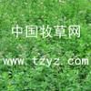 供应进口苜蓿除草剂苜蓿田杂草全除:特效牧草除草剂