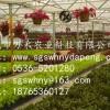 供应阳光板智能温室-智能温室建设-寿光市万禾农业