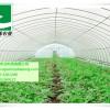 供应钢管拱棚-钢架拱棚-拱棚建设-寿光市万禾农业