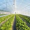 山东口碑好的农膜——农膜制造商