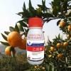细菌性角斑病乙蒜素杀菌剂蔬菜果树专用杀菌剂含量80%