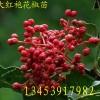 花椒苗、大红袍花椒苗、山西花椒苗、花椒苗价格