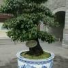 供应手绘青花陶瓷大缸 1.2米直径陶瓷缸