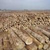 天津海运进口紫檀木物流公司