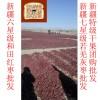 东莞市黄金田园红枣 新疆和田骏枣干果色泽自然健康食品