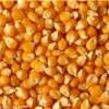 求购数量玉米