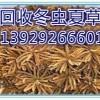 东山专业回收冬虫夏草,东山散装冬虫夏草回收价格