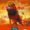 清苑县牌技公司实体店136乄2128 乄9786推牌九坐庄压庄教学