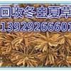 惠阳回收冬虫夏草哪里价格高,惠阳冬虫夏草大量回收
