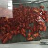 海鲜生蚝龙虾清洗流水线不锈钢网链