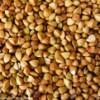 求购荞麦大小麦甜荞苦荞等原料
