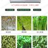 沈阳供应芽苗菜机的厂家 自动芽苗菜机的价格 小型花生芽机