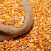现金长期求购大量玉米 小麦 高粱等原材料