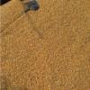 汈汊湖水产养殖单位求购玉米碎米大豆高粱等