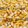 汉江大量求购玉米大豆高粱荞麦等农副产品