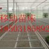温室苗床一站式购齐-超值低价-好评爆表-厂家直销