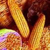 酒厂求购玉米小麦高粱碎米等原料
