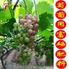 【硒】元素被發現奇特作用後橫空出現了富硒大米、葡萄、蔬菜等一系列的養生食品