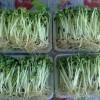 加盟益康园无土培育技术 种植有机芽苗菜月净赚十万