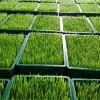 0添加绿色有机芽苗菜种植 代理加盟_月入万元