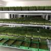 加盟益康园芽苗菜_加盟项目成本少_获利高_新型设备产值强