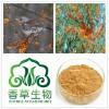 沙棘树茸提取物20:1多种规格浸膏粉