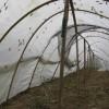 全新料耐氧化结实耐用蚂蚱养殖棚 志广专业定做