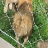 寧夏動物園專用獅子籠舍圍欄不�袗�繩網
