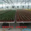 片温室大棚专用苗床网片 供应热镀锌网 规格齐全