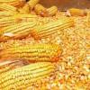 长期大量收购玉米黄豆高粱荞麦碎米?#20154;橇显?#26009;