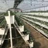 安平华耀草莓种植槽立体种植适合发展观光农业