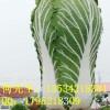 现代农业宣传玻璃钢青菜雕塑模型建设魅力村庄