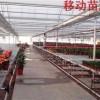 温室移动苗床江西种植育苗床华耀厂家定制