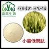 小麦若叶粉 小麦熟粉 小麦蛋白肽粉 小麦代餐粉