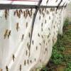 全新料的加宽的新料的纱网耐氧化的蚂蚱网定做网棚