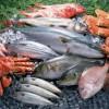 青岛港进口水产品冻鱼冻虾进口报关心得万享高鹏祥