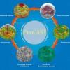 Procast铸造模拟精密铸造应力分析软件正版报价代理商
