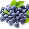 蓝莓玫瑰饮品贴牌