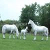 仿真马一比一展览马模型科技仿生马标本