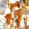 威代尔冰葡萄酒集安味道威代尔冰葡萄酒加拿大冰葡萄酒