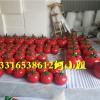休闲农业庄园的精彩项目玻璃钢小番茄雕塑开始出来做做了